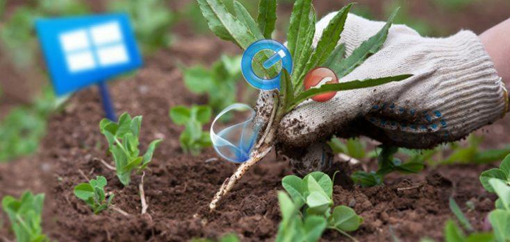 Удаление ненужных прпограмм в виде сорняка на грядке